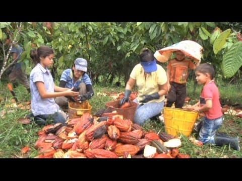 Documental La voz del Cacao