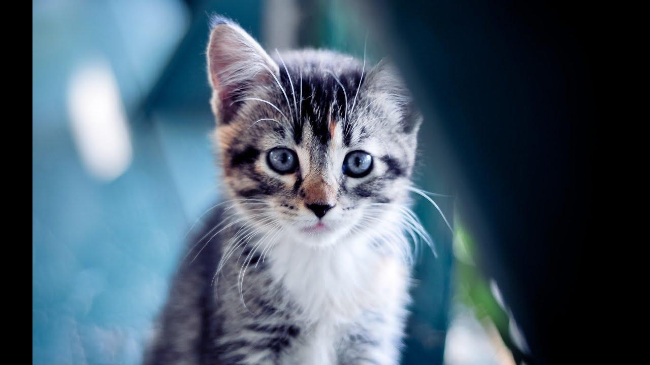 Download free hd wallpapers descarca gratis imagini - Cute kittens hd wallpaper free download ...