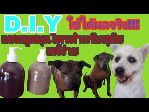 แชมพูสมุนไพรอาบน้ำสุนัขสูตรออแกนิคทำเองเหมาะกับน้องหมาแพ้ง่ายลดผิวหนังอักเสบไม่มีสารเคมี
