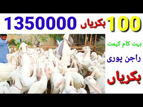 Download Sasti bakriyan your Rajan Puri    Got farm Sabir     Bakri ka goat farm  Bakrid ka Param