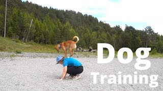 Training Session With A Podenco
