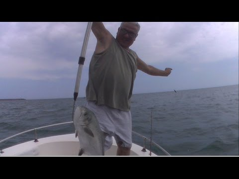 Leccia Amia a con il vivo - Pesca a traina costiera