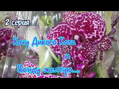 #орхидея #ФудСити  Орхидеи такие все красивые, опять хочу.... Новый завоз Орхидей  19 ноября 2019 г.