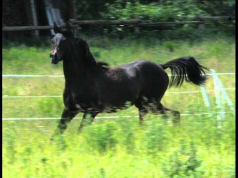 Cute Baby Dog Wallpaper Black Horse Dance With Me Baby Youtube
