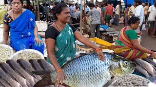 Amazing Bhimavaram Fish Market | भीमावरम फिश मार्किट | Spicy Seven