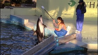 Pacific White-Sided Dolphin Training Session at Taiji Whale Museum