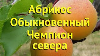 Абрикос обыкновенный. Краткий обзор, описание характеристик prunus armeniaca CHEMPION SEVERA
