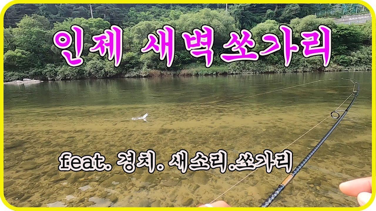 새벽 쏘가리 잡으로~! (feat.경치.새소리.쏘가리)korea Luer fishing~![117화]