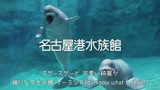 【名古屋港水族館】2018年度CM(ゴールデンウィーク)その1