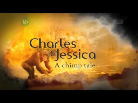 Charles and Jessica A chimp tale part 3