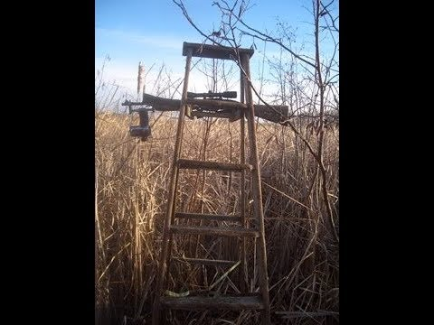 Marsh Madness - One Day In The Cattails
