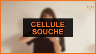 Biologie - Cellule souche