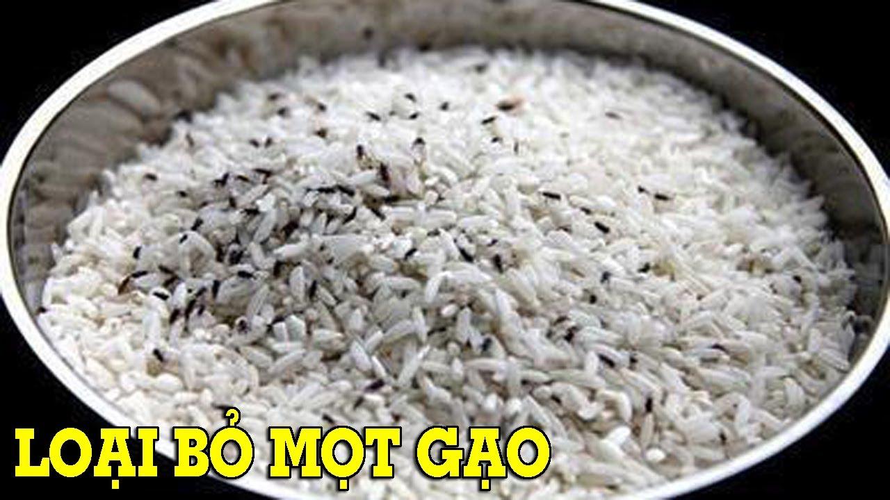 Cách loại bỏ và ngăn ngừa mọt đen trong gạo - Mẹo Vặt Cuộc Sống