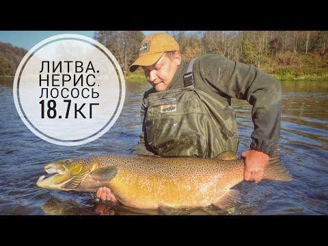 Ловля лосося в Литве. Нерис. Трофейный лосось. Lašiša Neris.Рыбалка в Калининграде - KÖNIGFISHING.