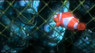 Finding Nemo - Swim Together!