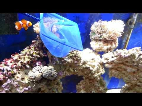How To Catch A Fish  In An Aquarium In 2 Mins