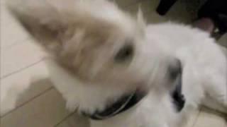 オフィス犬はお留守番隊長のお膝元で活動しています。