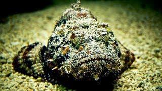 दुनिया के 5 सबसे खतरनाक समुद्री जीव ! World