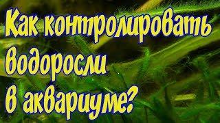 ТОП 7 советов по  контролю водорослей в аквариуме! ВОДОРОСЛИ В АКВАРИУМЕ!