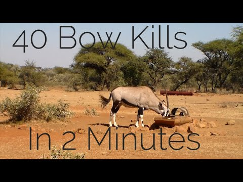 Bow Hunting Africa - 40 Bow Kills In 2  Minutes