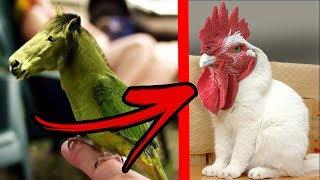 5 Razas de Animales Que no Sabias que Existen.