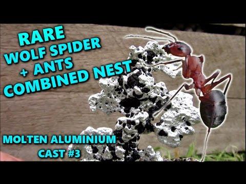 🔥 ANT + WOLFSPIDERs nest: Molten aluminium cast #3🔥