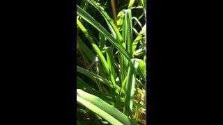 Ottawa Hardy Gardening 2014 update