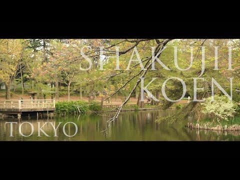 【音楽のみの風景動画】石神井池の水鏡、夕暮れ空が金色に写る(東京都練馬区・石神井公園) SHAKUJII KOEN PARK - TOKYO