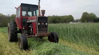 Massey Ferguson 1135 New Holland 1475 mowing rye grass.