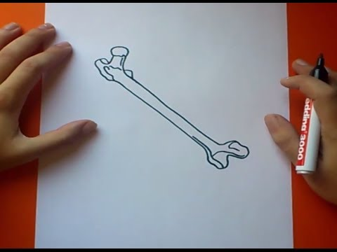 Como dibujar un hueso paso a paso | How to draw a bone - YouTube