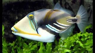 редкие морские рыбки смотреть обязательно 2