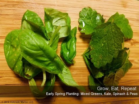 Greens, Kale, Spinach & Peas in the Spring Garden