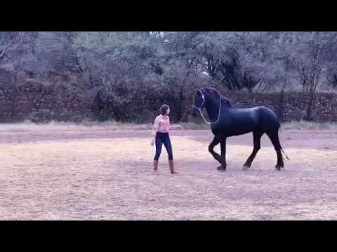 Ángela Aguilar monta a caballo