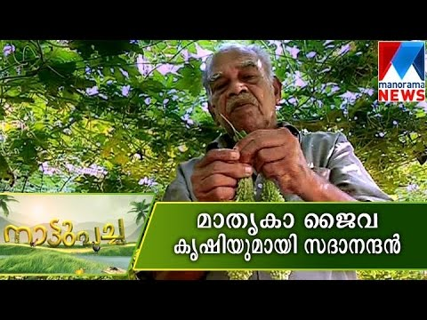 Model Organic farming by Sadananthan | Manorama News