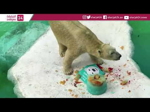 Singapore Zoo's senior polar bear celebrates his 27th birthday