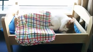Ikea Doll Beds Turned Into Adorable Cat Beds