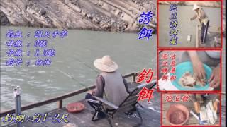 淡海兩用泡豆 曾文水庫釣遊 總統魚 烏尾冬 實記 2018.0411-12