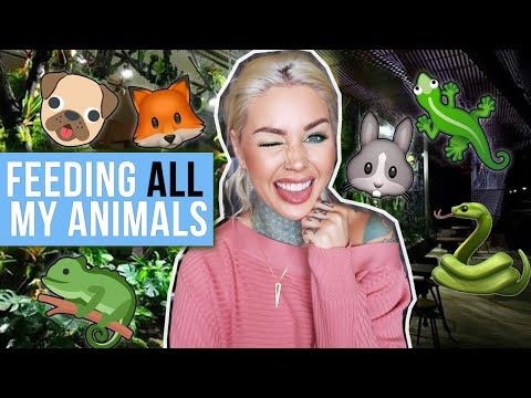 Feeding ALL My Pets in One Video | KristenLeannimal