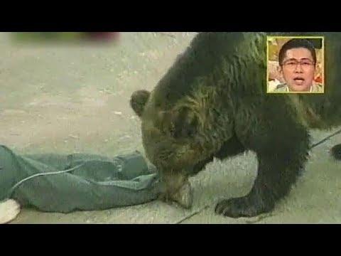【再現実験】クマと突然の遭遇!効果的な対処法とは?