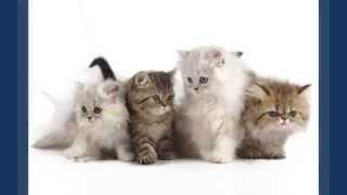 Милые котята, кошки фото.