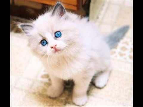 Top 10 des plus beaux chats du monde !