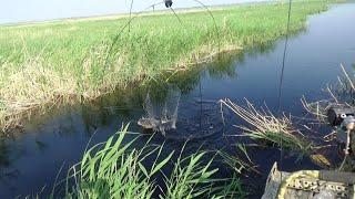 В этом болоте еще много сазана. Рыбалка на паук подъёмник. Трофеи взяты.