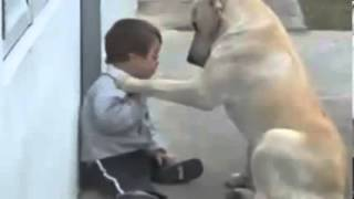 Mans Best Friend Is A Well Trained Lab Puppy Dog - Texaslabradorbreeder.com - Hunterscreekretrievers