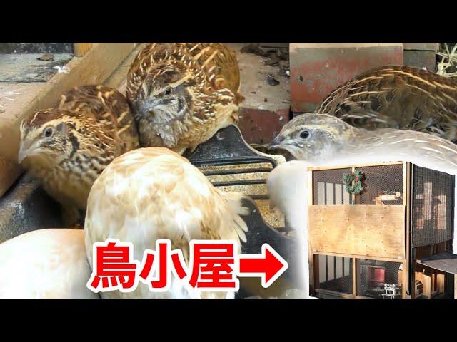 大量のウズラを飼育する為に鳥小屋を自作した男の家が楽し過ぎた・・・!