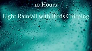 10 Hours - Light rainfall with birds chirping - Sounds For Sleep