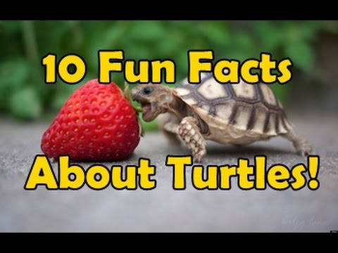 10 fun facts about turtles youtube