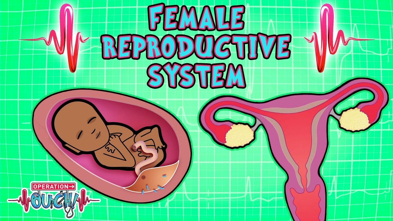 Science For Kids Body Parts Female Reproductive System