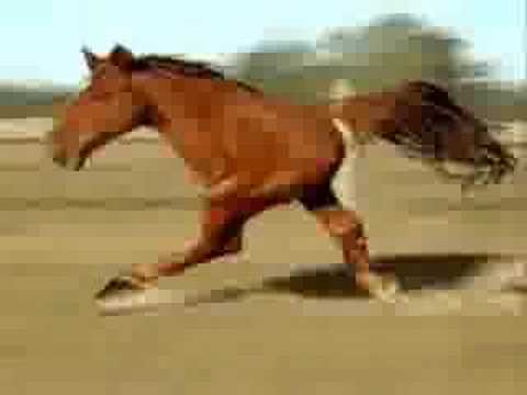 Two legged horse - YouTube - photo#49