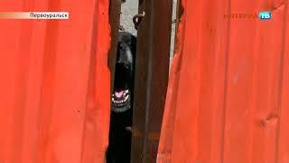 Собаки СХ 2 30 05 19
