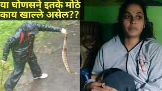 || साप पकडण्यापेक्षा तेथे पोहोचणे कठीण झालय || Heavy rain making snake rescue difficult ||